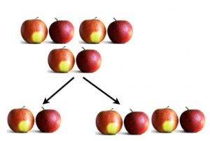 apples, dividing apples